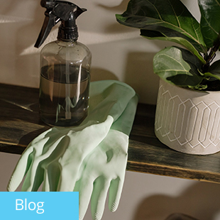 img text: Blog img des: Glove and a spray bottle with a plant
